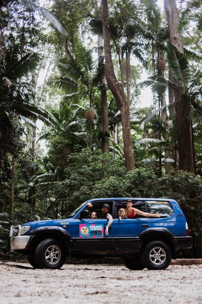 Fraserdingo Rainforest
