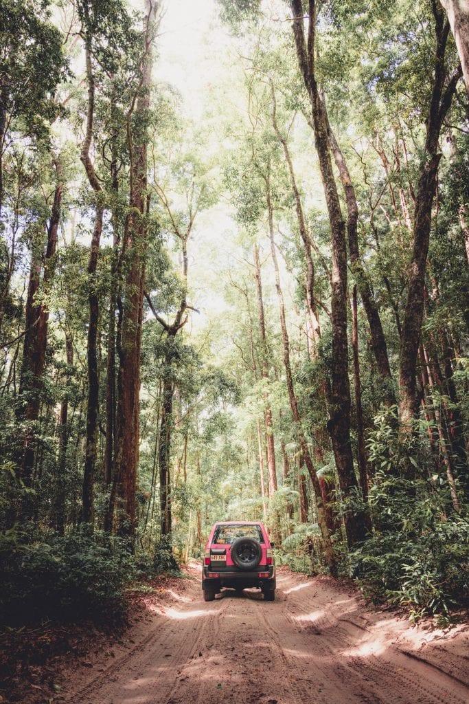 Fraserdingo Rainforest2