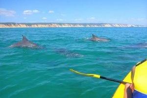 Rainbow Beach Dolphins